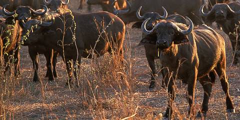 5-Day Great Migration in Serengeti + All National Parks