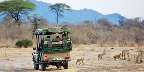 5-Day Mikumi & Ruaha Wildlife Lodge Safari