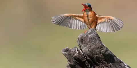 3-Day Serengeti to Ngorongoro Crater Tour