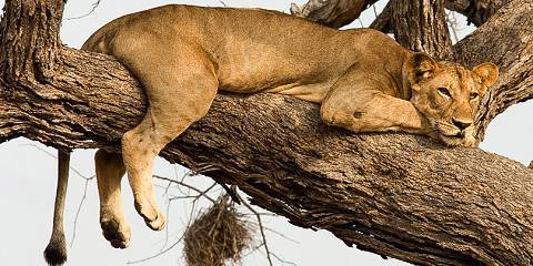3-Day Explore Tarangire, Ngorongoro and Lake Manyara