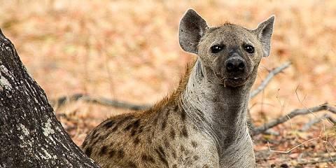7-Day Tanzania Mid - Range Safari Holiday