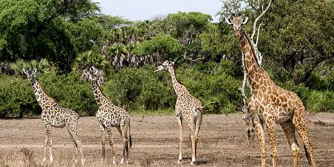 8-Day Serengeti Safari Experience Tour