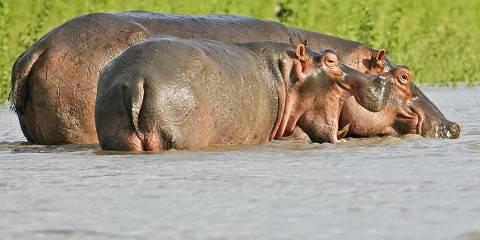 Luxury Safari to Saadani National Park