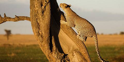 8-Day Classic Guided Tour to Serengeti