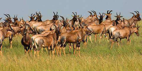 10-Day Migration Experience Tanzania &Kenya -Semi Luxury