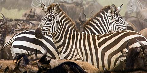 5-Day Group Tour Manyara Serengeti Ngorongoro Tarangire