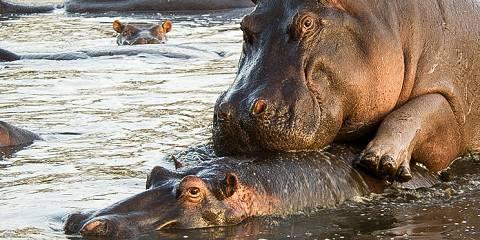 14-Day Wilderness Safari Cultural Experience and Zanzibar