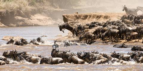 6-Day Special Migration Safari
