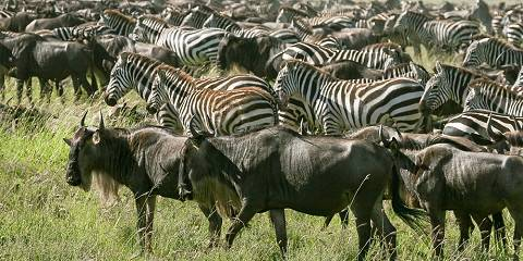 7-Day Journey of the Wildebeest - Luxury