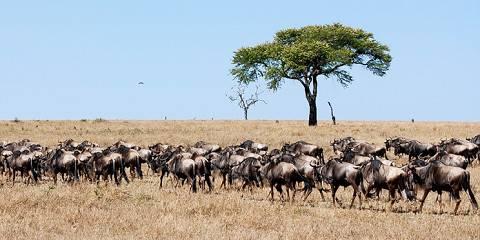 4-Day Ndutu Ngorongoro & Serengeti Migration Safari