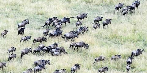 3-Day Wildebeest Migration