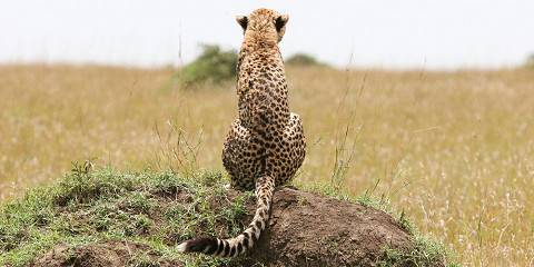 6-Day The Big 5 of Tanzania