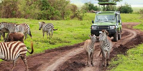 3-Day Masai Mara Private ( Land Cruiser)