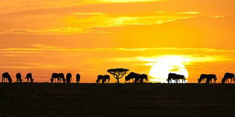 4-Day Ngorongoro & Serengeti Only Budget Safari Tanzania