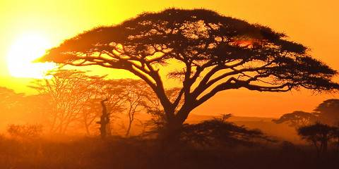 4-Day Tarangire, Serengeti & Ngorongoro (Tented) Lodge