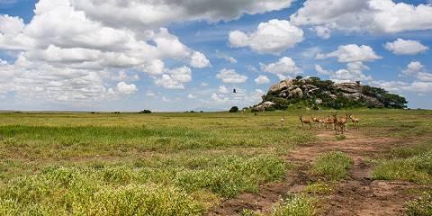 3-Day Mikumi Park, Udzungwa and Masaai Cultural Tribe