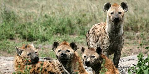 3-Day Safari High Lights: Serengeti & Ngorongoro