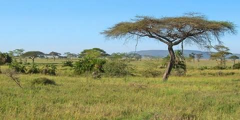 7-Day Extra Ordinary Tanzania Safari