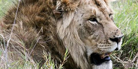 4-Day Flying Safari to Ruaha National Park