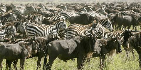 4-Day Camping Safari Tarangire Serengeti and Ngorongoro