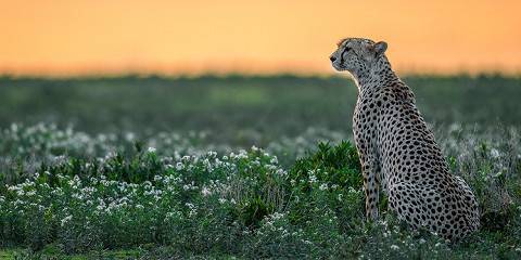4-Day Serengeti Luxury Tour in Tanzania