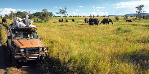 3-Day Safari to Nyerere National Park