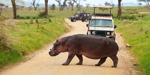 4-Day Unique Safari to Tarangire, Manyara & Ngorongoro
