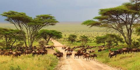 5-Day The Essence of Tanzania