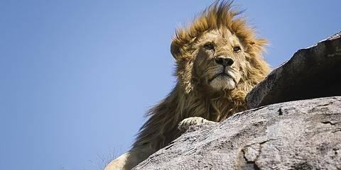 3-Day Safari in Ruaha National Park - Lion Safari