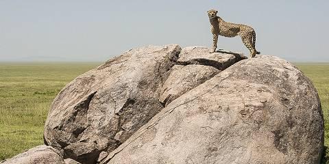 3-Day Masai Mara National Reserve-Midrange-Minivan