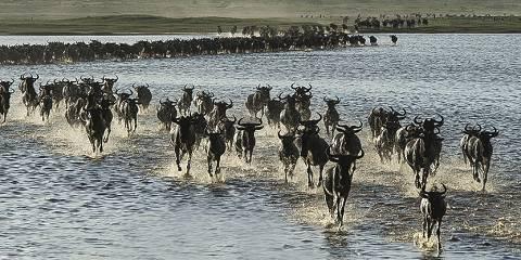 5-Day Predators and the Wildebeest Calving Season Safari