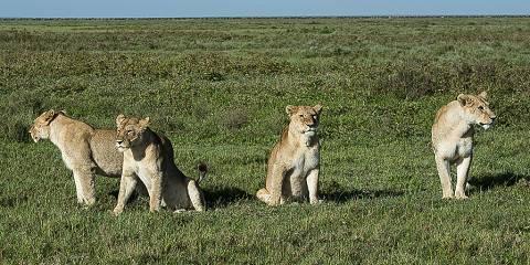 7-Day Budget Tanzania Camping Safari