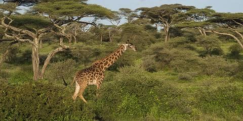 6-Day Exclusive Tanzania Lodging Safari