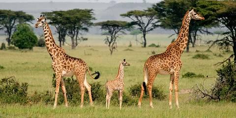 8-Day Classic Private Tanzania Great Migration Safari