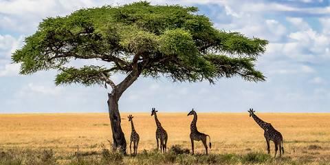 6-Day Tarangire, Manyara, Serengeti, Ngorongoro Lodge