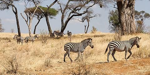 5-Day Tanzania Budget Camping Safari