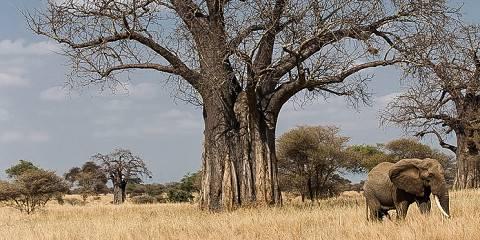 6-Day Comfort Tanzania Safari Experience