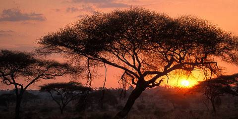 15-Day East Africa Migration Discoverer Safari Ex Arusha