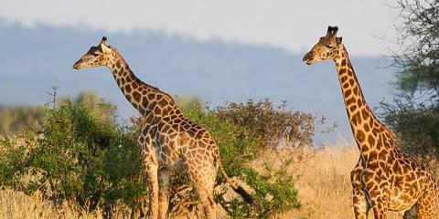 4-Day Lake Manyara, Ngorongoro & Serengeti