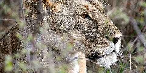 6-Day Wildlife Encounters - Comfort - Private Tour