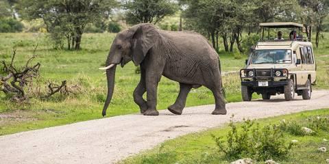 3-Day Tarangire , Ngorongoro Crater & Manyara Safari
