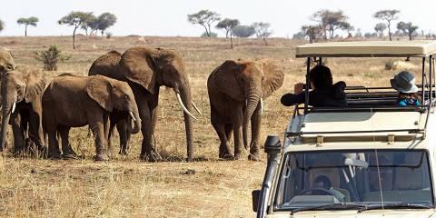 3-Day Tarangire, Ngorongoro & Kilimanjaro Experience