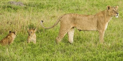 5-Day Tarangire, Serengeti & Ngorongoro - Budget Safari