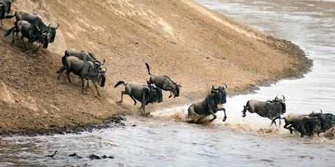 8-Day Western Serengeti Wildebeests Migration May-July