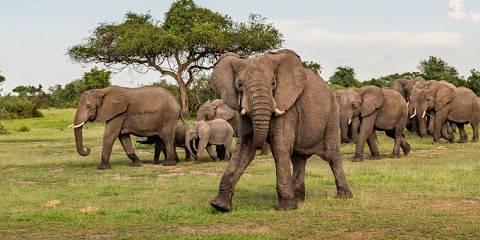 5-Day Tarangire, Serengeti & Ngorongoro Safari