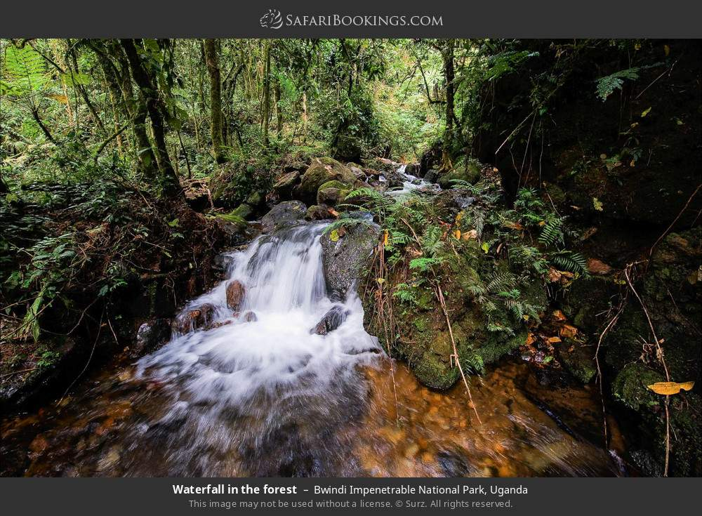 Waterfall in the forest in Bwindi Impenetrable National Park, Uganda