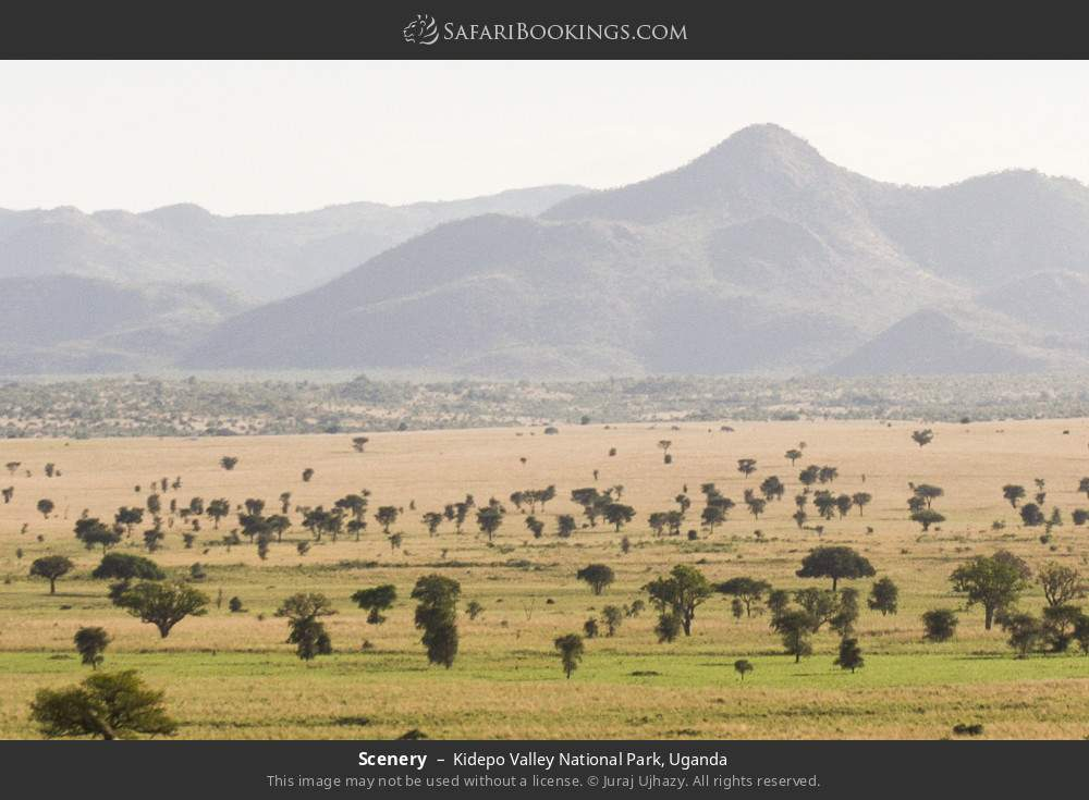 Scenery in Kidepo Valley National Park, Uganda