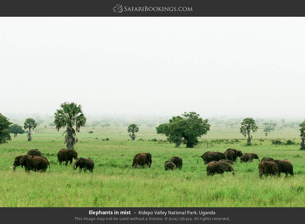 Elephants in mist in Kidepo Valley National Park, Uganda