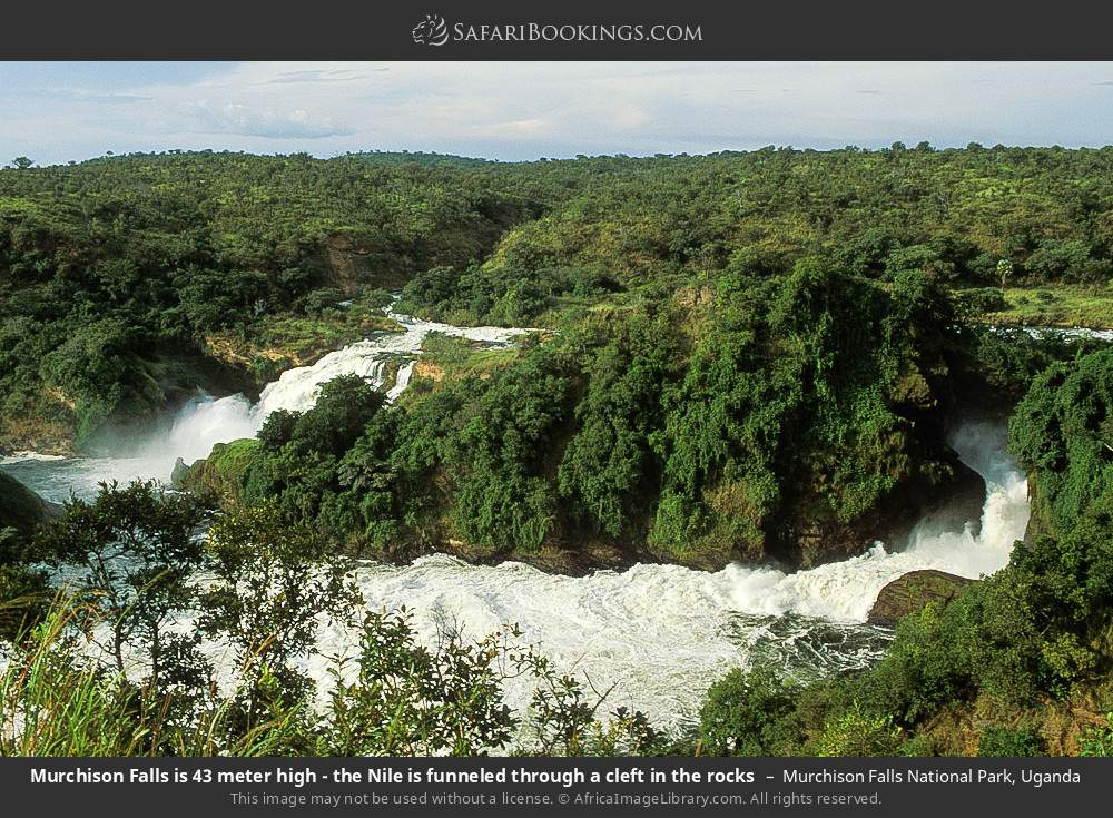 Murchison Falls is 43 meter high - the Nile is funneled through a cleft in the rocks in Murchison Falls National Park, Uganda