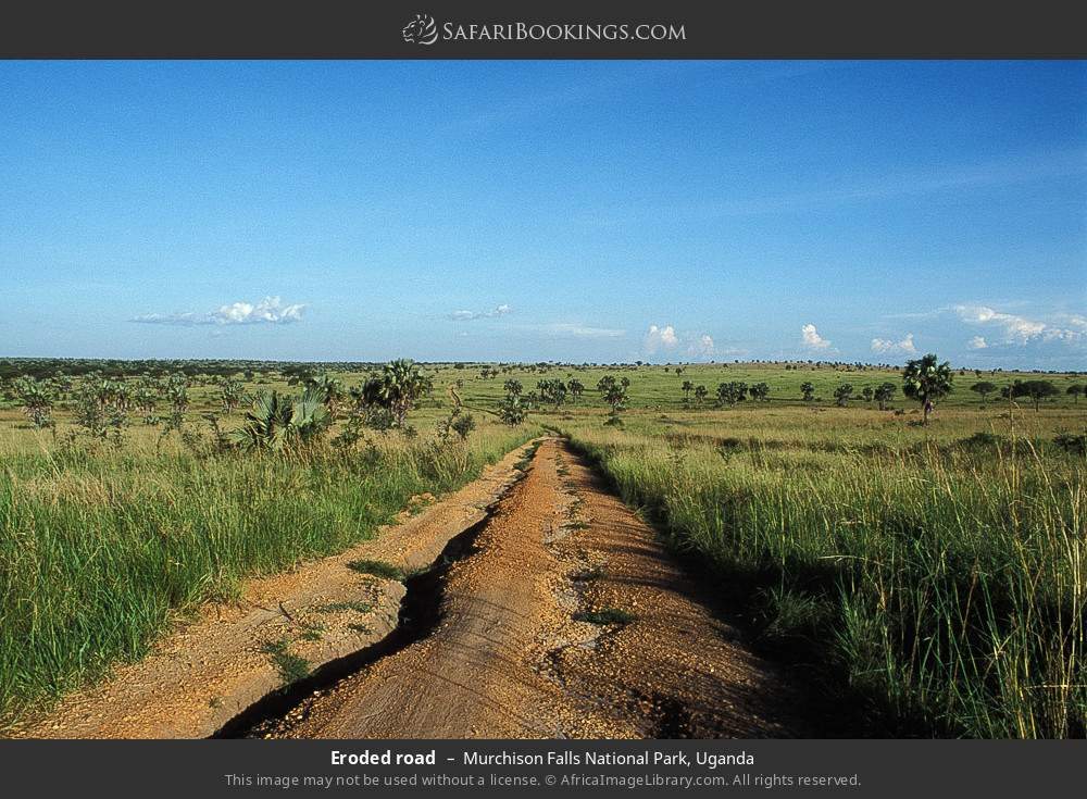 Eroded road in Murchison Falls National Park, Uganda
